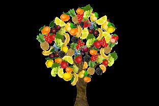 fruit-1929879_640