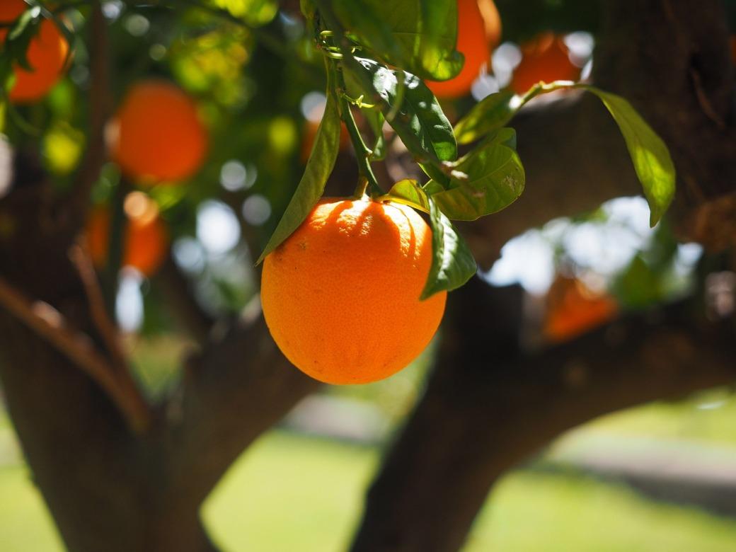 orange-1117645_1280